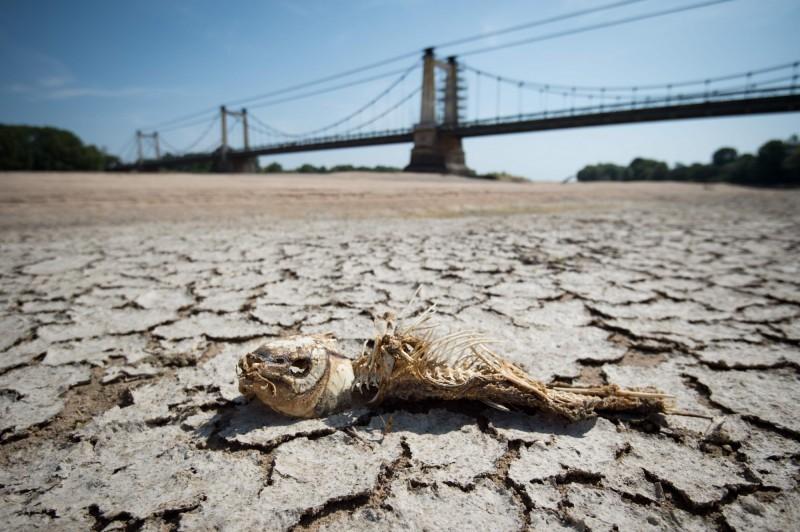 热浪席卷西欧!荷兰比利时创历史高温,法国河流干涸龟裂