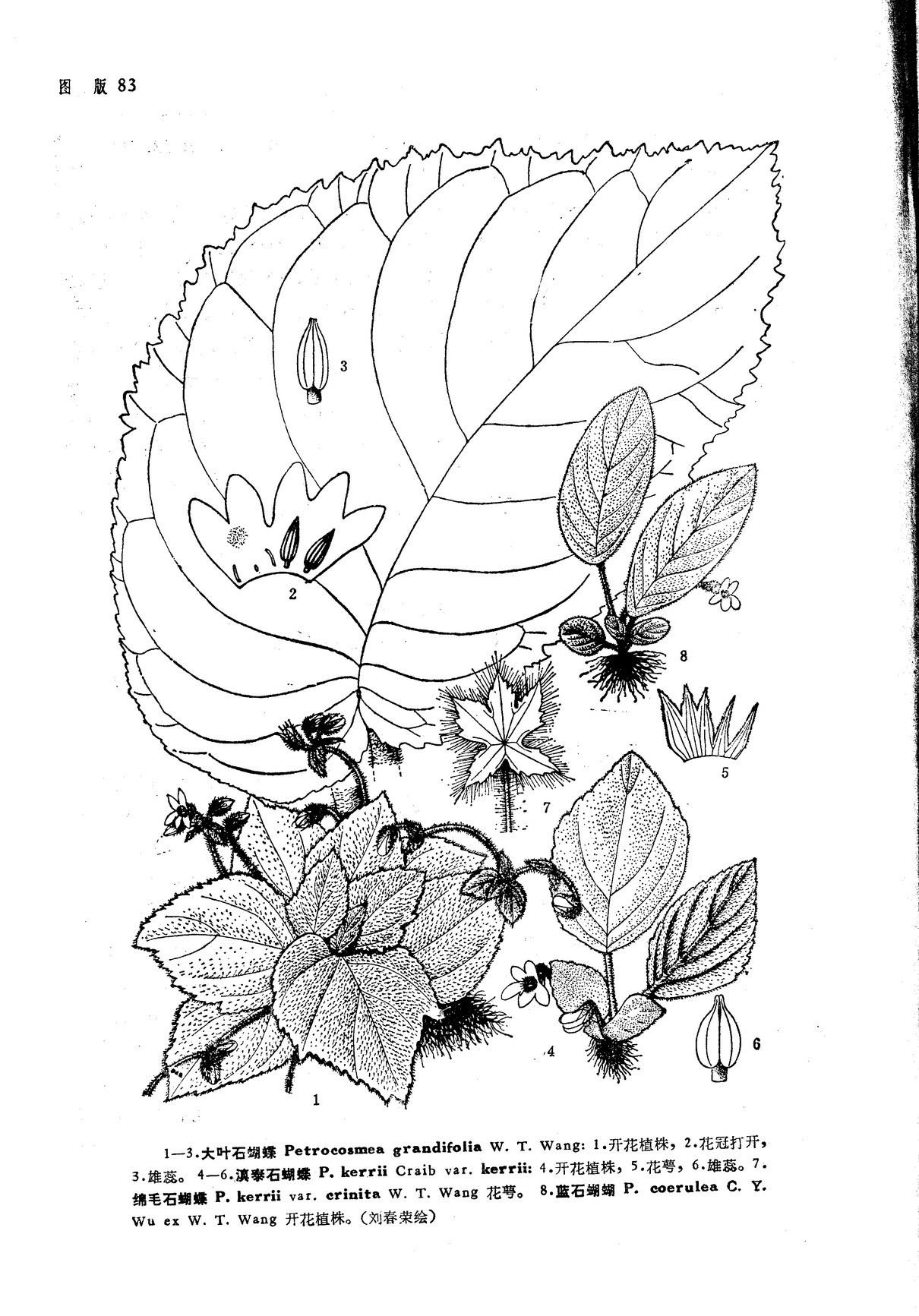长蝴蝶简笔画步骤