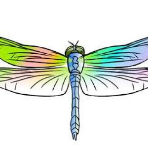 Dragonfly Pediatric OT