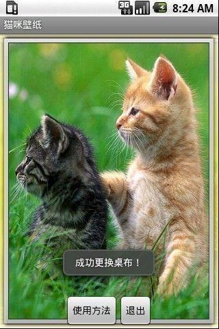 可爱猫咪壁纸_360手机助手