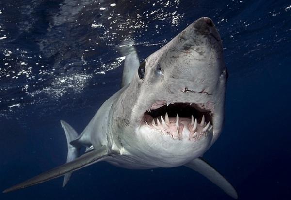 捡回一条命!男子深海垂钓巨大鲨鱼上钩:结果意外 -  - 真光 的博客