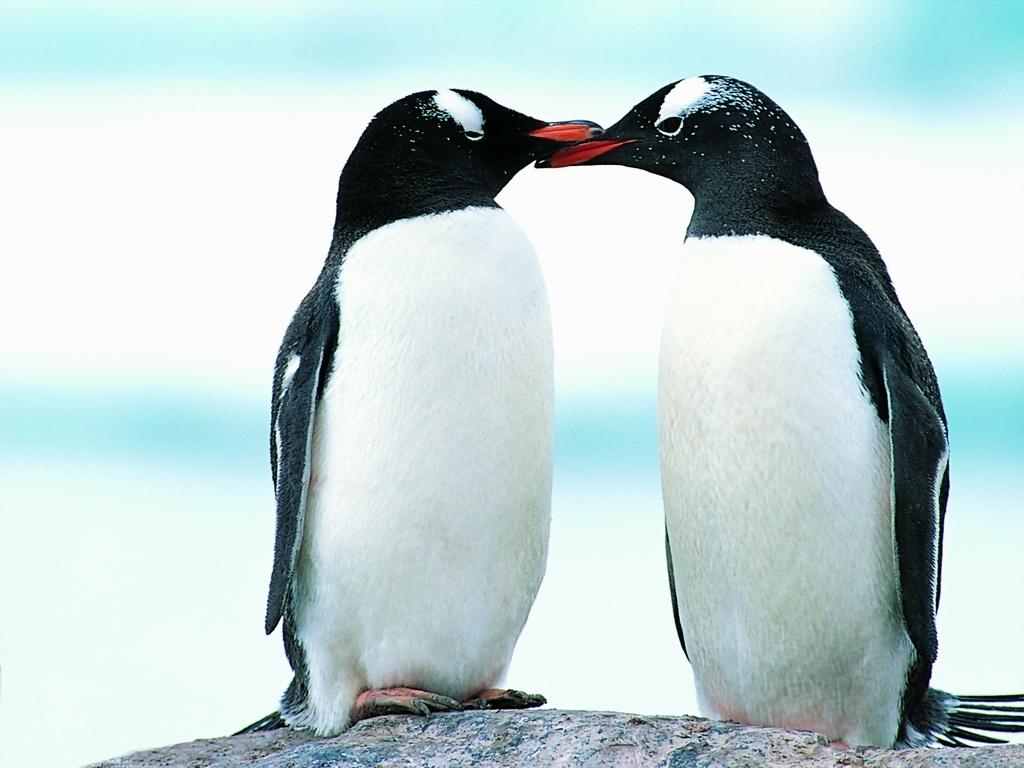 游泳 可爱图片 企鹅