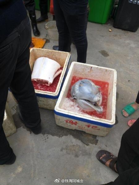 【转】北京时间     残忍!市民当街宰杀白海豚 网友:与杀熊猫同罪 - 妙康居士 - 妙康居士~晴樵雪读的博客
