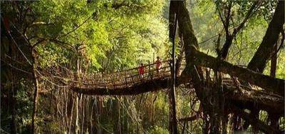 """世界最""""古怪""""桥,建造500年却越走越牢固,看过的人无不赞叹_图3"""