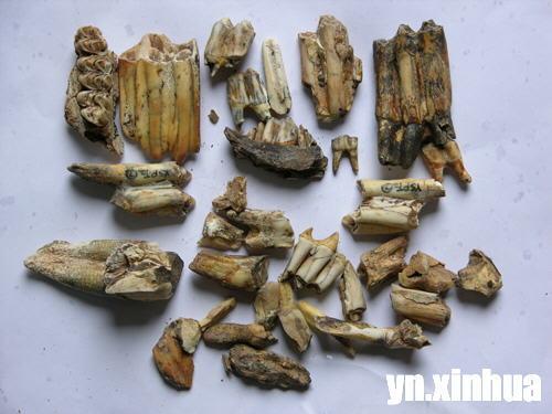 牛牙齿结构图片