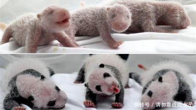 12张刚出生小动物的样子,我只认出了3种,最后一个被吓