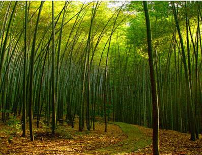 生物资源,英文名称:biologicalresources,定义1:生物圈中植物,动物与