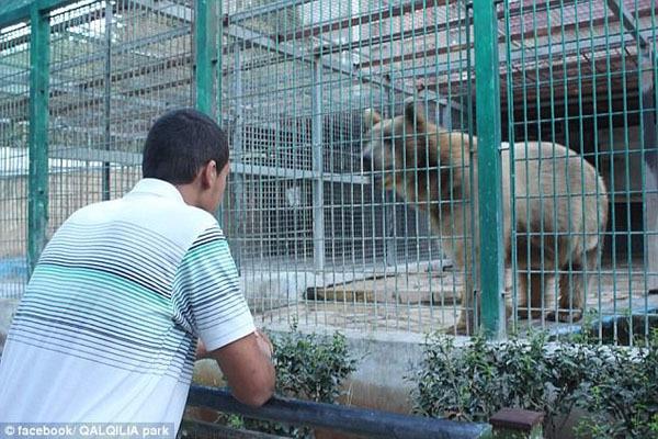 【转】北京时间     巴勒斯坦9岁男童动物园喂熊被咬断胳膊 - 妙康居士 - 妙康居士~晴樵雪读的博客