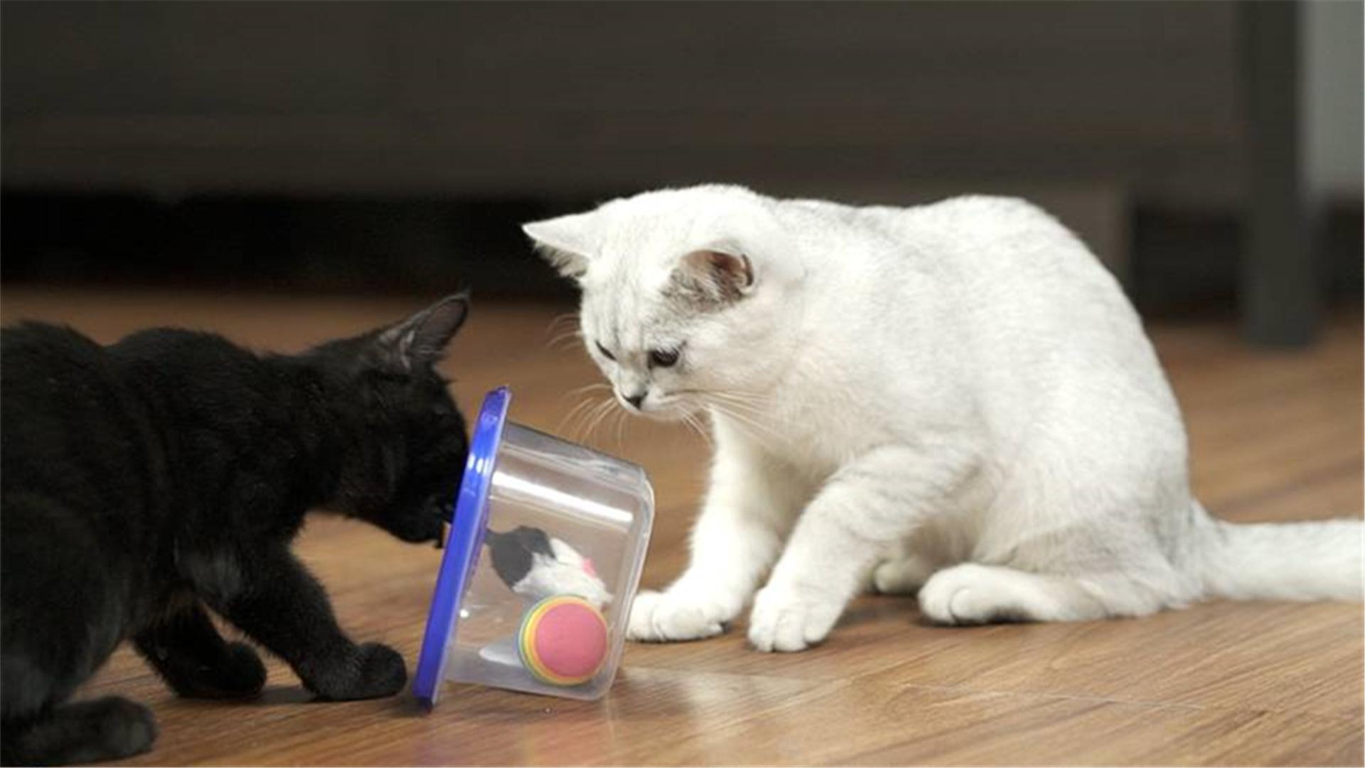 DIY猫咪游乐盒,开启猫咪自嗨模式