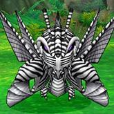 斑纹螳螂.jpg