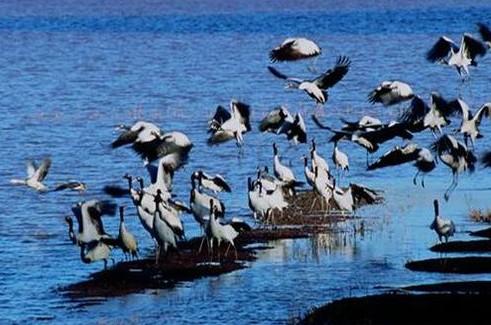 云南会泽黑颈鹤自然保护区