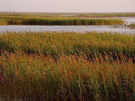 黄河三角洲湿地
