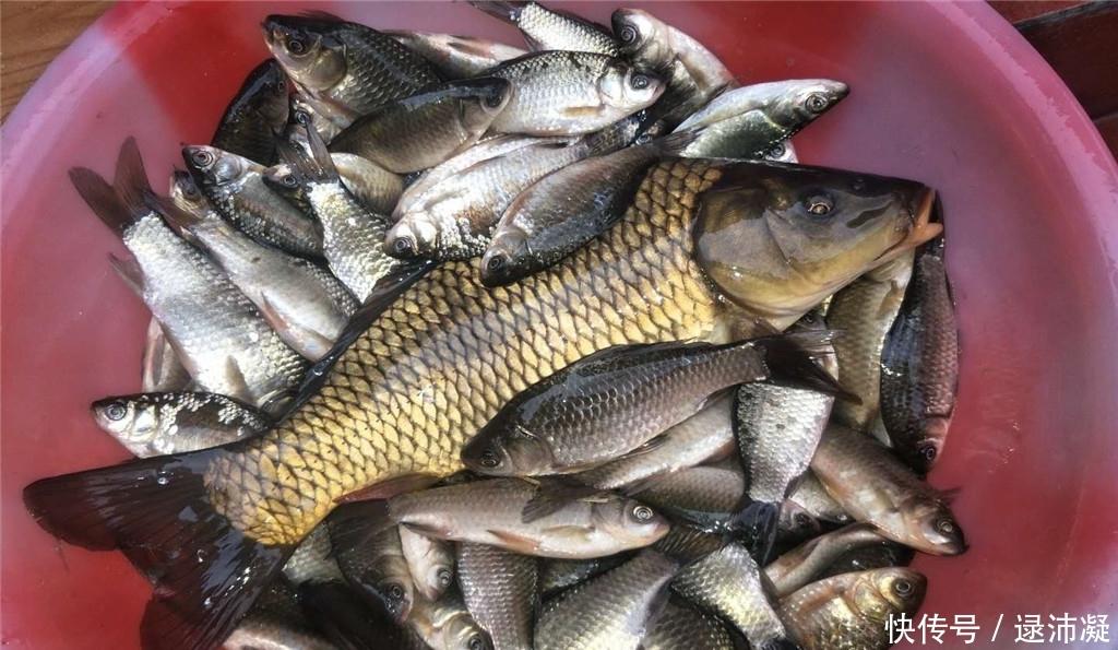 """<b>老钓友珍藏的饵料配方,纯天然粮食制成,""""通杀""""鲫鱼鲤鱼和草鱼</b>"""