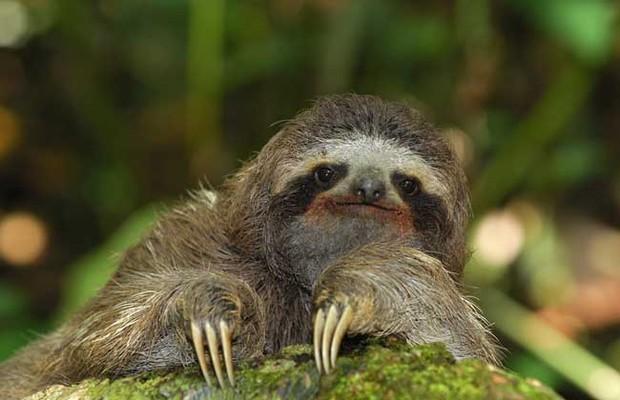 电影动物森林树懒图片