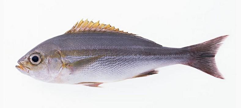 壁纸 动物 鱼 鱼类 788_352