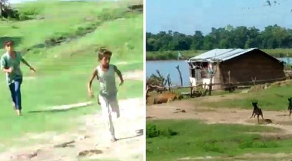 印度两黑狗驱赶进村老虎拯救全村人