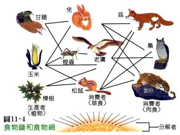 食物链一词是英国动物学家埃尔顿(c.s.eiton)于1927年首次提出的.
