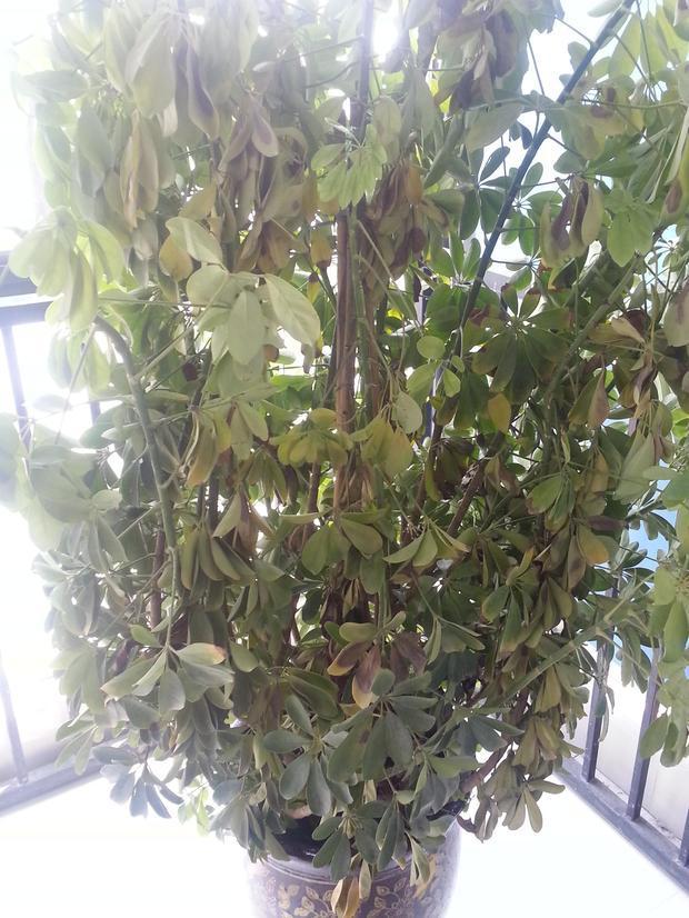 微信头像招财植物图片