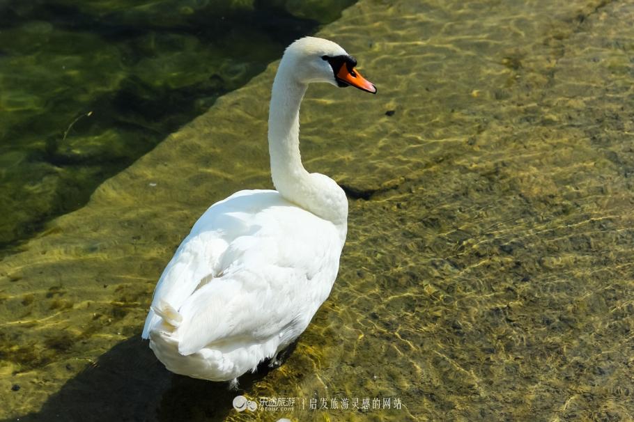 去琉森湖边和小动物们来一次美丽的邂逅