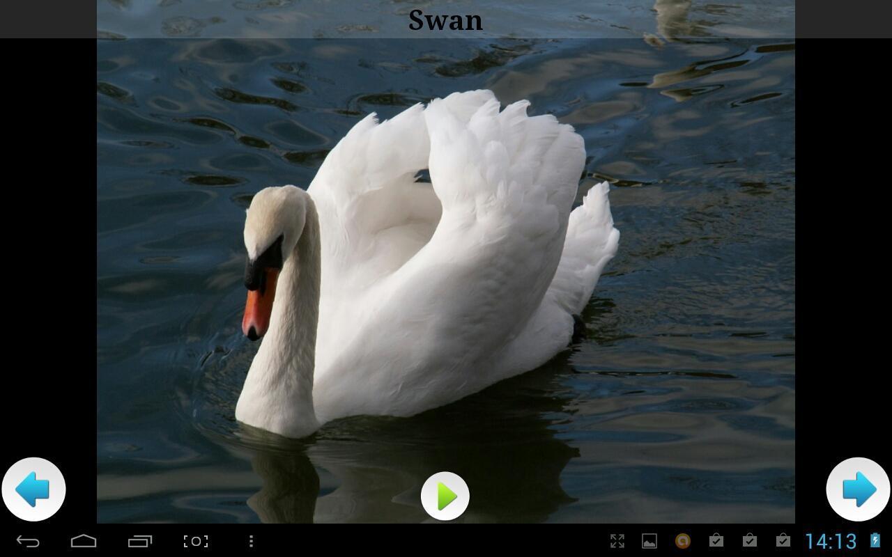 欧洲动物声音下载_v1.0安卓客户端