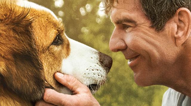 治愈佳作《一条狗的使命2》?#21350;?#21578;,定档5.17同步北美上映