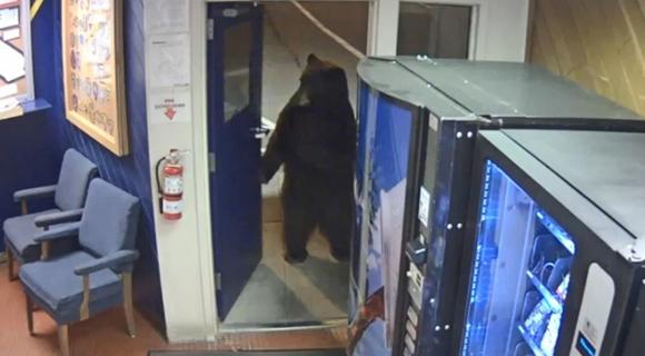 到此一游!美国一头熊误入警局 吓坏当班警察