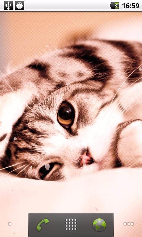 精选多张超可爱小猫动态壁纸