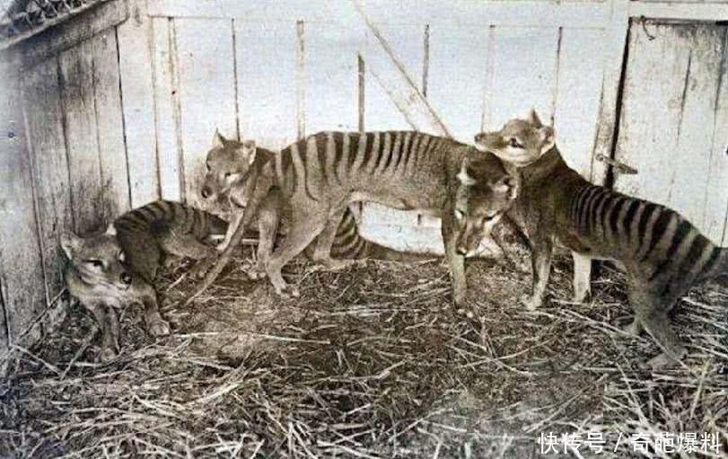 盘点5种已灭绝的古老动物,第4种很可能幸存下来