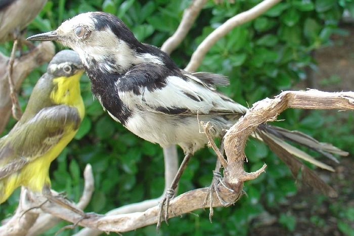 壁纸 动物 鸟 鸟类 雀 700_467