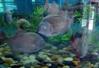 壁纸 动物 海底 海底世界 海洋馆 水族馆 鱼 鱼类 348_239