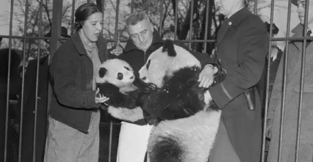 没想到,杀熊猫曾是西方人的热潮 -  - 真光 的博客