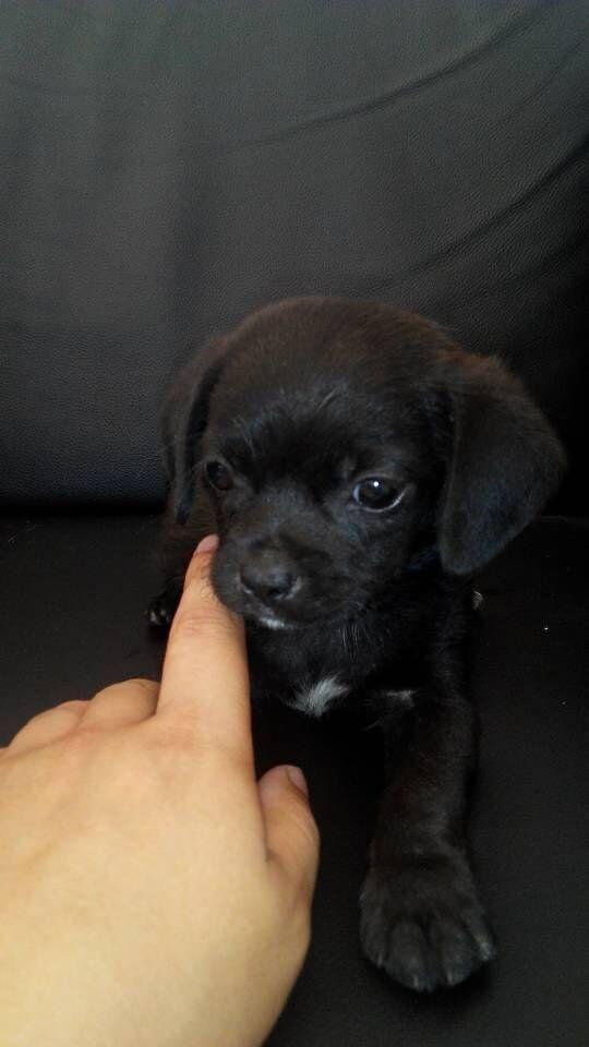 求高人辨认这小可爱是什么品种的狗狗