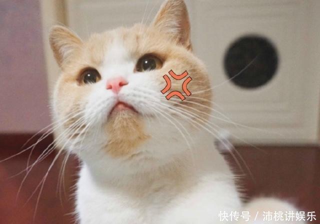 红包蜜桃动态精选爱我别走微信搞笑猫咪表情小孩图片带字表情图片