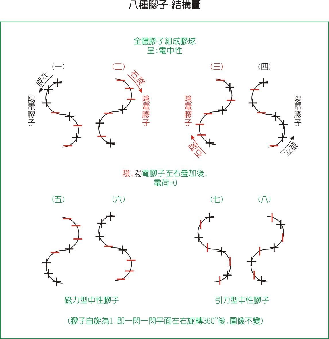 胶子-内部结构模型图