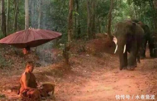 泰国大象做出跪拜苦行僧行为,引来无数游客,但照片引发网友热议!