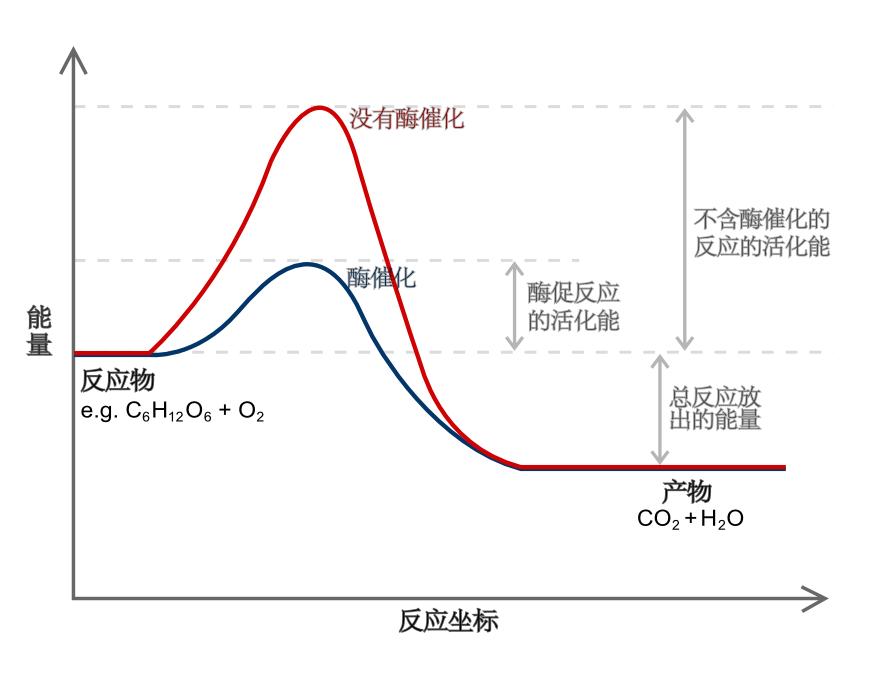 已知碘元素的原子结构示意图