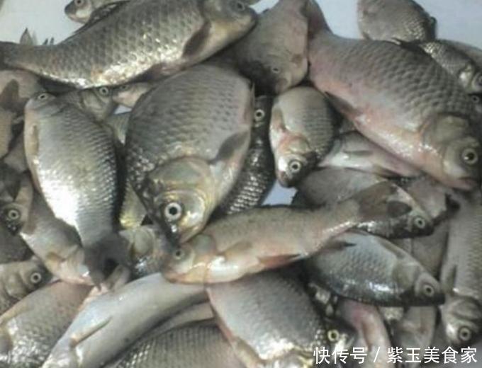 农村人爱吃的小野味,下河就能抓得到,虽然肉比较少,但味道鲜美