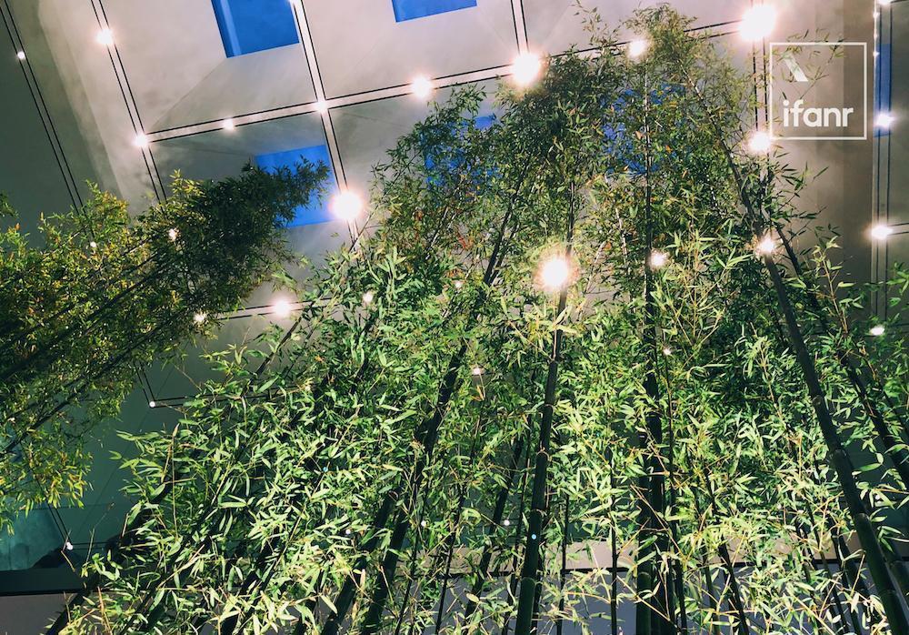 澳门百家乐网_dafa888.bet网页版_我来到中国第_50_家_Apple_Store_里面有一大片竹林