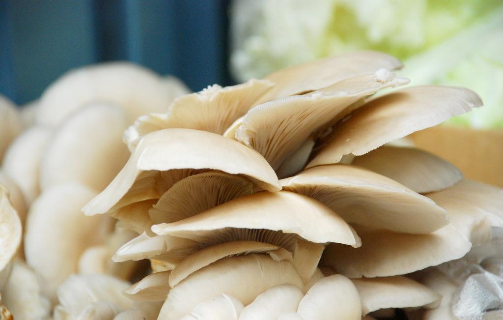 蘑菇的折法步骤