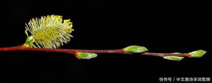 四首描写早春大全的古诗词,感受春之内裤男式情趣柳树生机图片