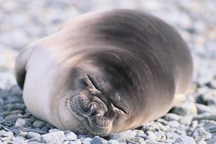 海洋动物是怎么睡觉的?
