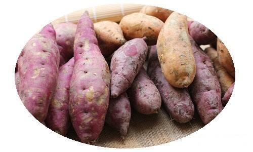 图解;这些有毒蔬菜 遇见千万要躲开 - 行走并凝思着 - 行走并凝思着