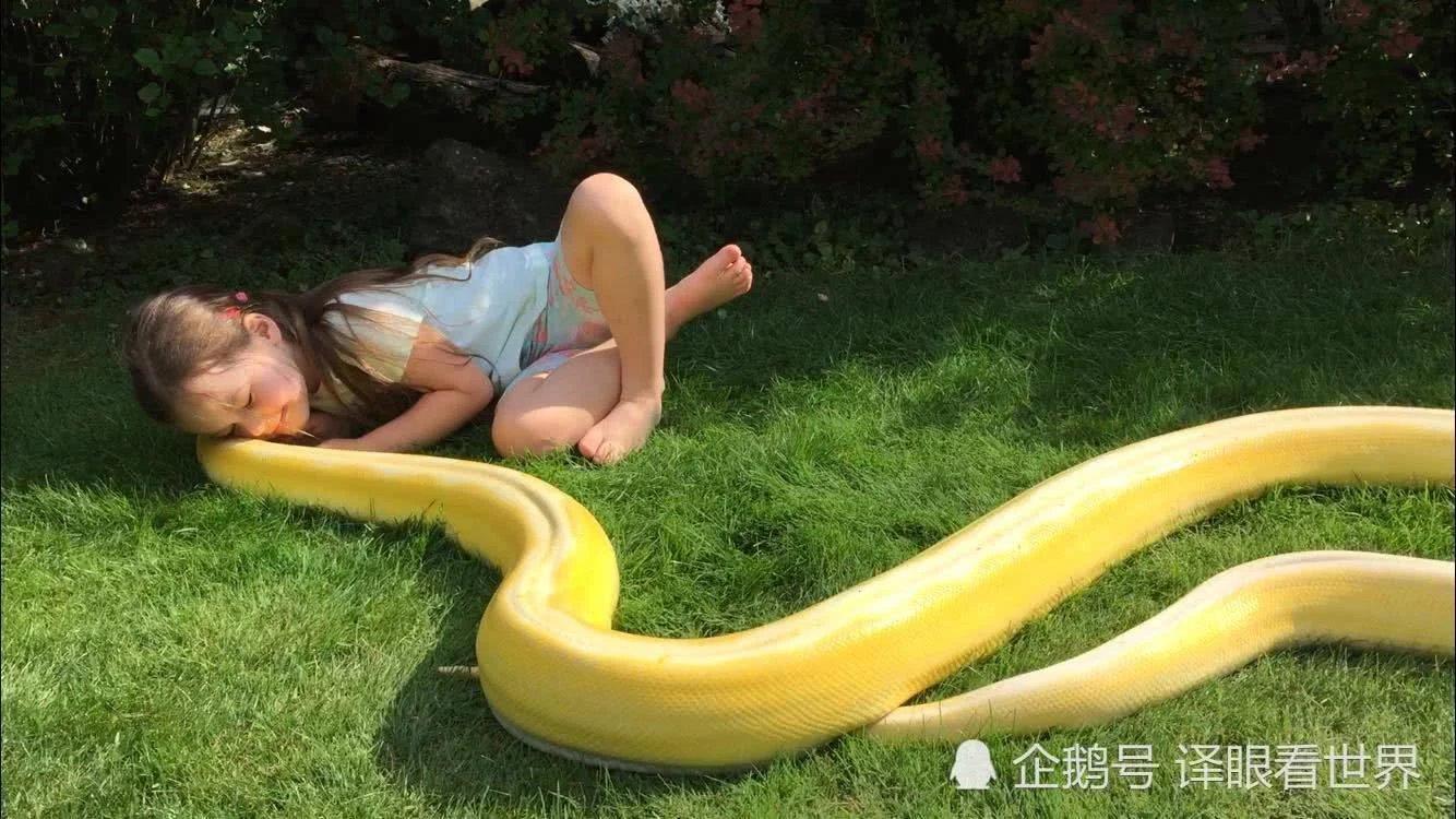"""3.6米长巨蟒""""站起身"""" 求5岁小女孩抚摸"""