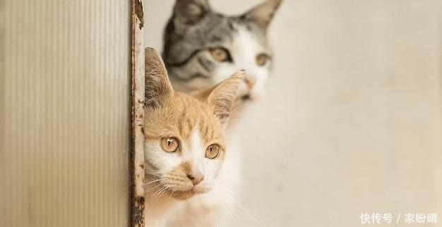 如果把猫咪关在门外,它会不停地喵喵叫,你知道是什么原因吗?