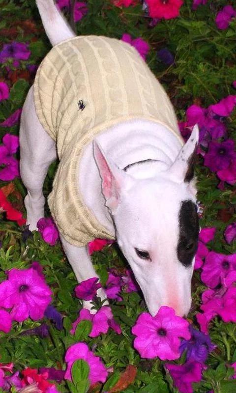 休闲益智 >牛头梗拼图  牛头梗拼图狗是世界上最迷人和可爱的动物
