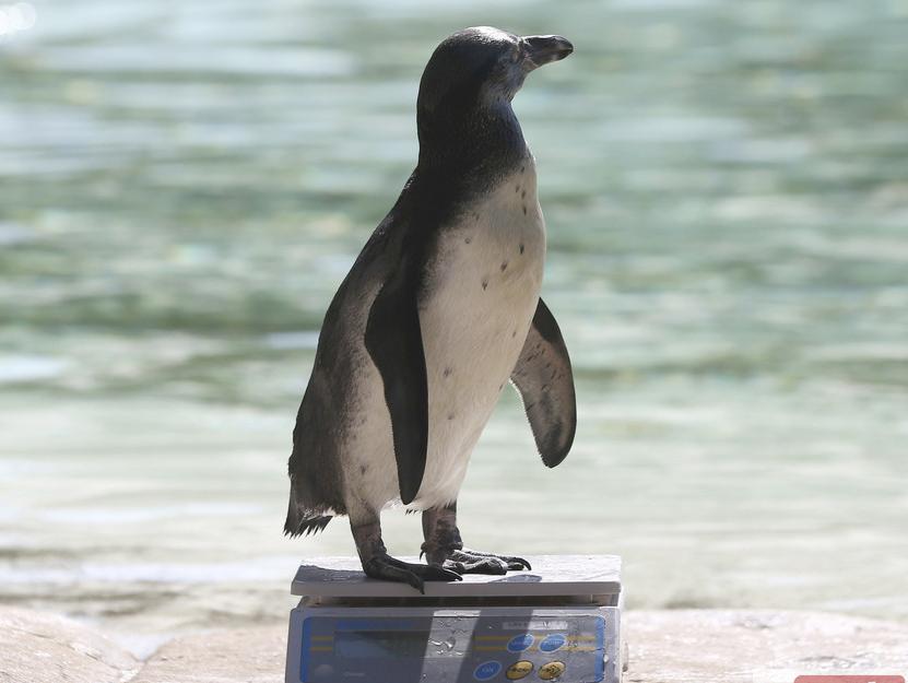 伦敦动物园年度称重 万余动物集体卖萌
