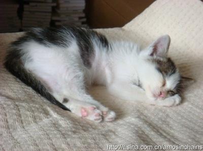 小花猫睡觉是什么样子