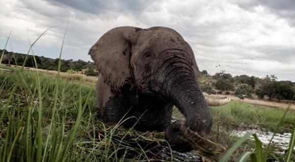 非洲发生大规模猎杀 90头大象毙命象牙被砍