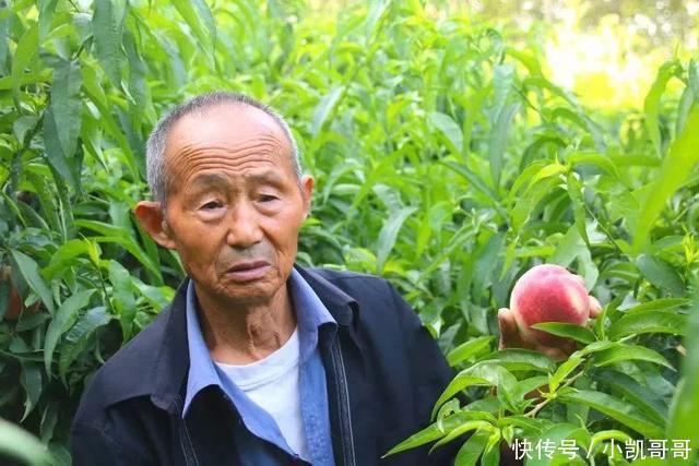 90岁的爷爷和他的一亩三分地桃园:农家生活,永远不缺少阳光