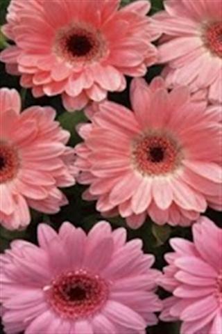 壁纸主题 春天的花朵壁纸下载